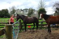 馬、コンサート、バター/ Horses, Music and Butter Making - アメリカからニュージーランドへ