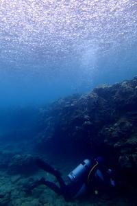 17.8.21 今日も今日とて - 沖縄本島 島んちゅガイドの『ダイビング日誌』