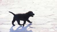 子犬 - 信仙のブログ
