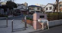Vol.1224 平川町北公園 - 小太郎の白っぽい世界