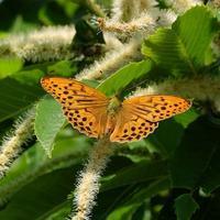 蝶なのか蛾なのか - 昆虫(動植物)撮影記録