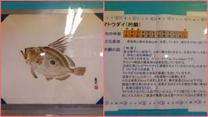 魚拓 -第3弾- - 埼玉県魚市場「市場あれこれ」