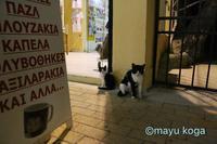 真夜中の猫集会 - ねこ旅また旅