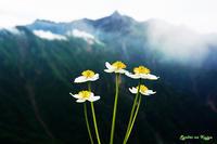尾根に咲く - 憧憬の九重Ⅱ