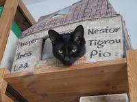 にゃっという間の一か月 - 『ココんちの (3+1)+(1+1+1) 猫と一犬のたわごと』 6 Pitchouns et 2 Pitchounettes