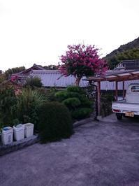 百日紅 - 大三島のおはなし