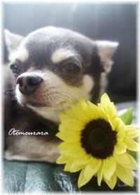 fuku & sunflower 福太郎 と 向日葵 - 日々楽しく ♪mon bonheur