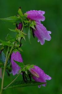 霧の中の花々 - 錦眼鏡