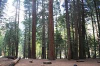 Kings Canyon Camping 2 - ビスケットの缶