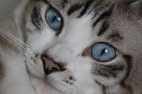 ギンコ様のお言葉 - ぎんネコ☆はうす