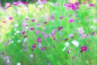 8月21日 今日の写真 - ainosatoブログ02