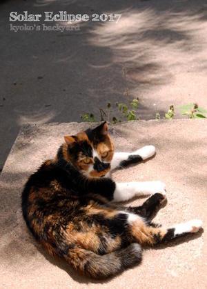 猫と楽しむ部分日食2017 - Kyoko's Backyard ~アメリカで田舎暮らし~