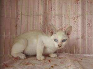 8月27日里親会デビュー猫たち。 - 青梅にゃんにゃん・サークル「WISH」