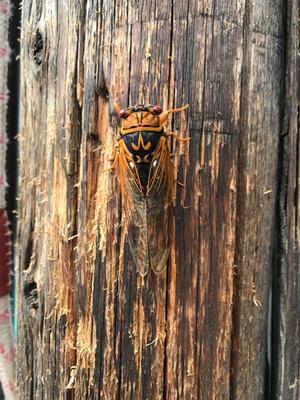 軽トラの中で羽化していました - 昆虫ブログ むし探検広場