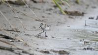 干潟で探鳥 - いい男の「歩々是道場」