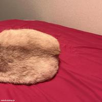 おしりおしり - 賃貸ネコ暮らし 賃貸住宅でネコを室内飼いする工夫