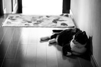 夏の猫  /  Handevision IBERIT 2.4/50mm - HarQ Photography