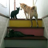 夫、階段から落ちる。 - ソラシド綴り