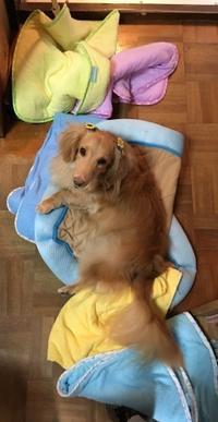 それは洗濯物 - きょうのはなwithくるみ~愛犬写真日記~