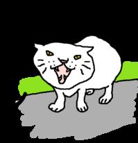 シャーッ!! - 猫とねーさん。