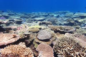 極上サンゴ 奄美大島ダイビング - 奄美大島 ダイビングライフ    ☆アクアダイブコホロ☆