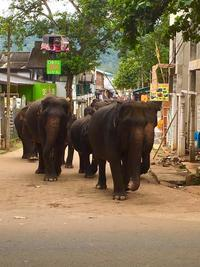 スリランカの旅~象の水遊び✨ - 八巻多鶴子が贈る 華麗なるジュエリー・デイズ