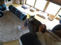 お膝好き - 雑記帳~信州の東のほうで。
