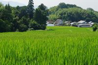 夏の明日香村近郊 偵察 - katsuのヘタッピ風景