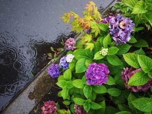 8月22日今日の写真 - ainosatoブログ02