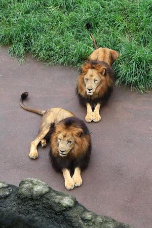 両手を揃えて - 動物園写真館