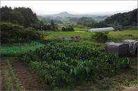 桜井市高家 畑と畝傍山 - ぶらり記録(写真) 奈良・大阪・・・