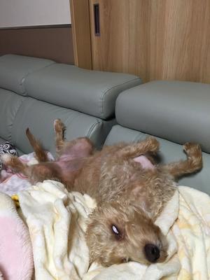 ホラーな1枚 - きたのさと動物病院 | 札幌白石区・東区 | 一般診療・皮膚科・耳科