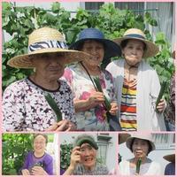 胡瓜の収穫 ~ほくほく笑顔がいっぱい~ - たんぽぽ菱野の里