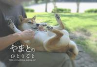 柴犬の自転車こぎ【動画あり】 - yamatoのひとりごと