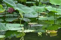丹生湖の水鳥 - 残りの人生楽しく行こう