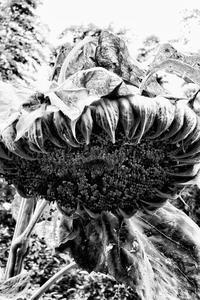 夏、復活… - Photo & Shot