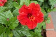 熱帯の花はやっぱり暑い - もるとゆらじお