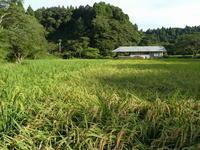 暑さが戻りましたが、、。 - 千葉県いすみ環境と文化のさとセンター