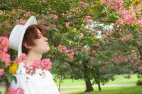 百日紅の頃 【6】 - 写真の記憶