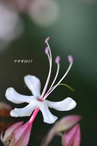 運命の花 ☆2 - 写愛館