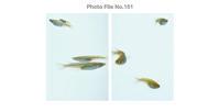 STUDIO M2 Photo File No.151 「めだか」 - ST-M2 Blog