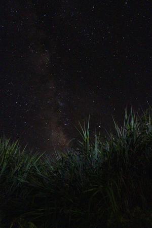 無人島冒険学校〔7日目〕砂浜で過ごす夜。満天の星空の下で、いつの間にか夢の世界へ。みんなたくましくなっています。 - ねこんちゅ通信(ネコのわくわく自然教室)