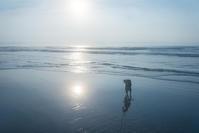 早起きの散歩は - 東に向かえば海がある
