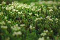 凹んでも、花は咲く - ひつじ雲日記