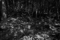 樹海と木漏れ日 - akiy's  photo