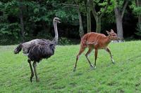 千葉市動物公園~草原ゾーンの動物たち - 続々・動物園ありマス。