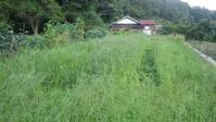 布見畑はまた、大草原化しています。 - チドルばぁばの家庭菜園日誌パート2