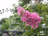 秘密 - 花の咲み、花のうた、きらめく地上 ―― photo&poem gallery kannon花音
