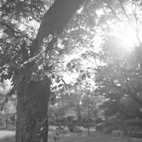 パークロード、8月の朝①。 - SunsetLine