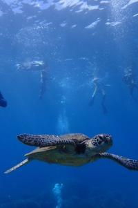 快晴!大島海峡ダイビング - 奄美大島 ダイビングライフ    ☆アクアダイブコホロ☆